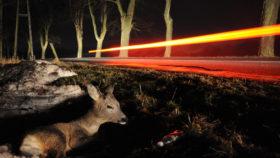 Gefahr durch Wildwechsel