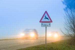 Wildunfall-Ratgeber-300x200 Risiken eines Wildunfalls senken
