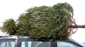 Transport-vom-Weihnachtsbaum-280x158 6 Tipps zum erfolgreichen Gebrauchtwagenverkauf