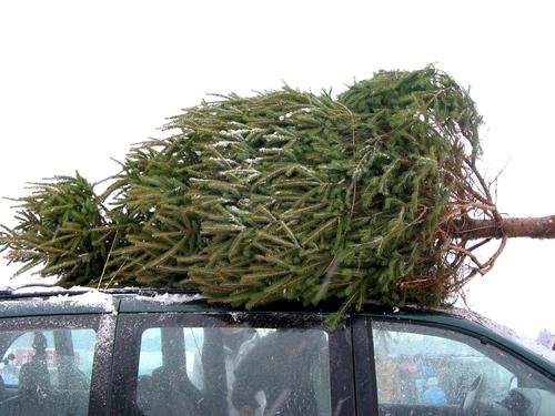 tipps f r autofahrer so transportieren sie den tannenbaum sicher autoteile blog. Black Bedroom Furniture Sets. Home Design Ideas